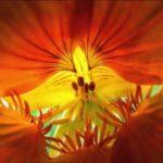 Темно-оранжевая приправа куркума для лица и тела