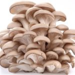 Польза грибов вешенок