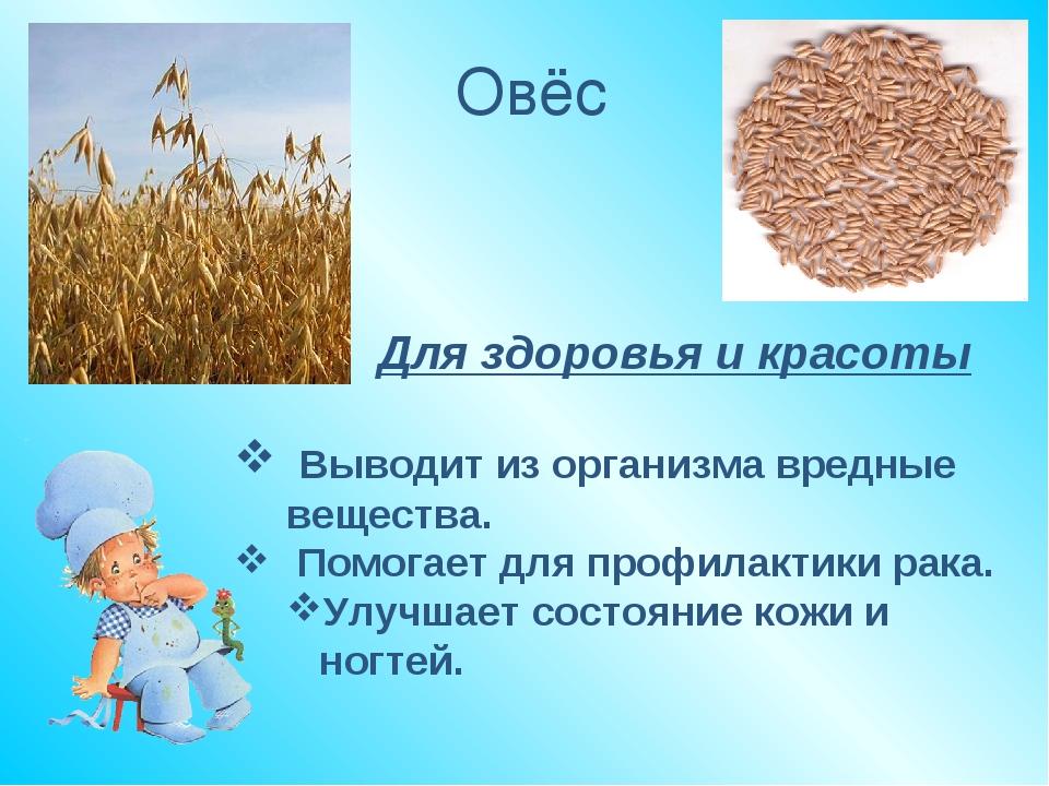 Польза овса