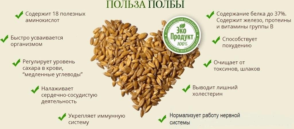 Польза пшеницы